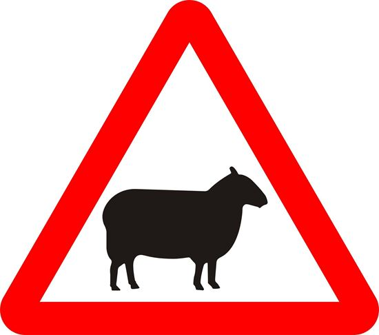 Sheep likely to be in road ahead road sign